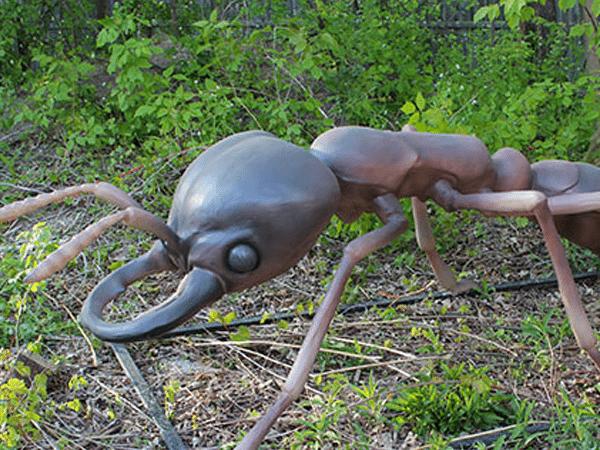 ant-01